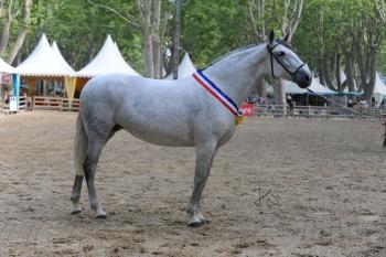 RÉSULTATS DU CHAMPIONNAT DE FRANCE 2010 (BEAUCAIRE)